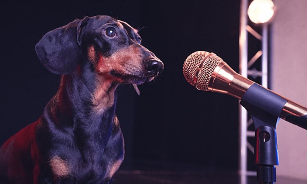Country Dog Names Inspired by Singers