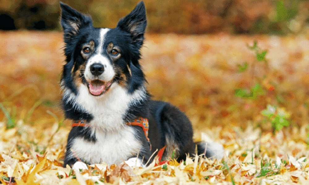 Cute Country Dog Names