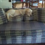 Dog off Couch Spray