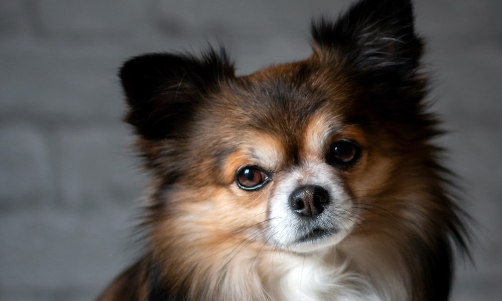 Famous Small Dog Names
