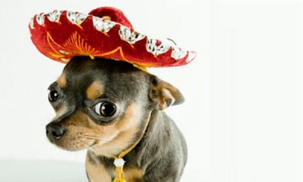 Funny Mexican Dog Names