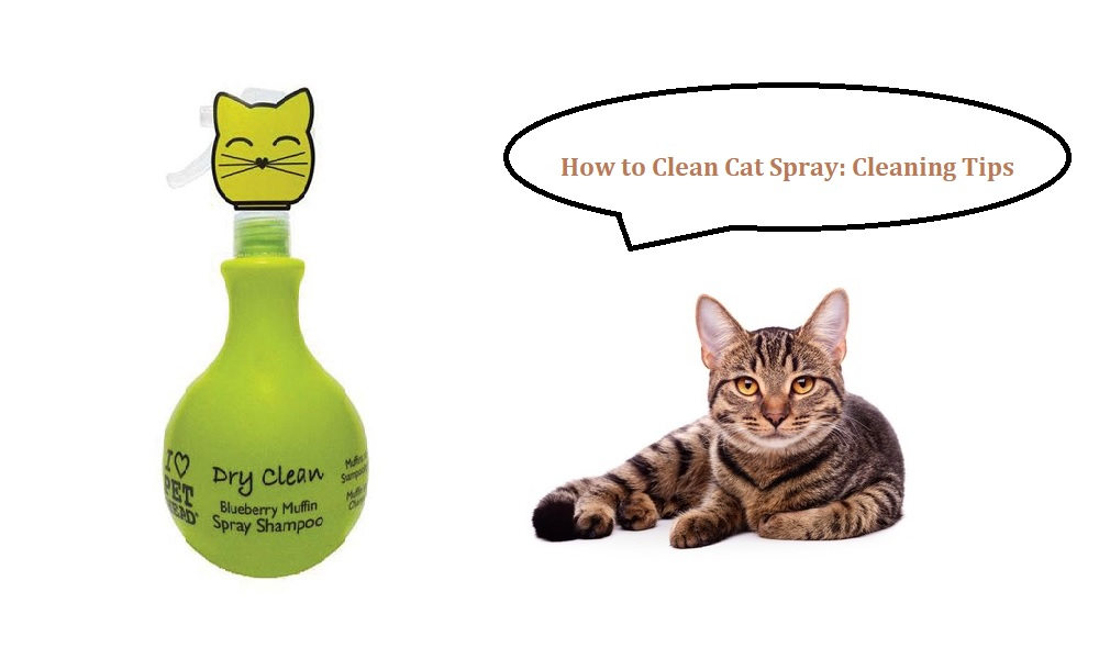 How to Clean Cat Spray