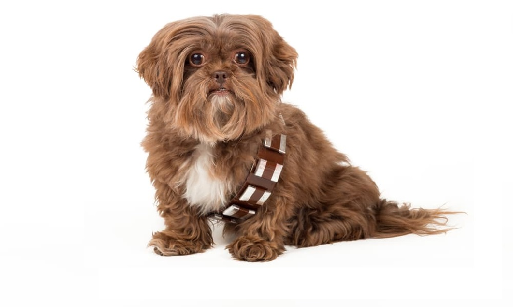 Our Favourite Star Wars Dog Names