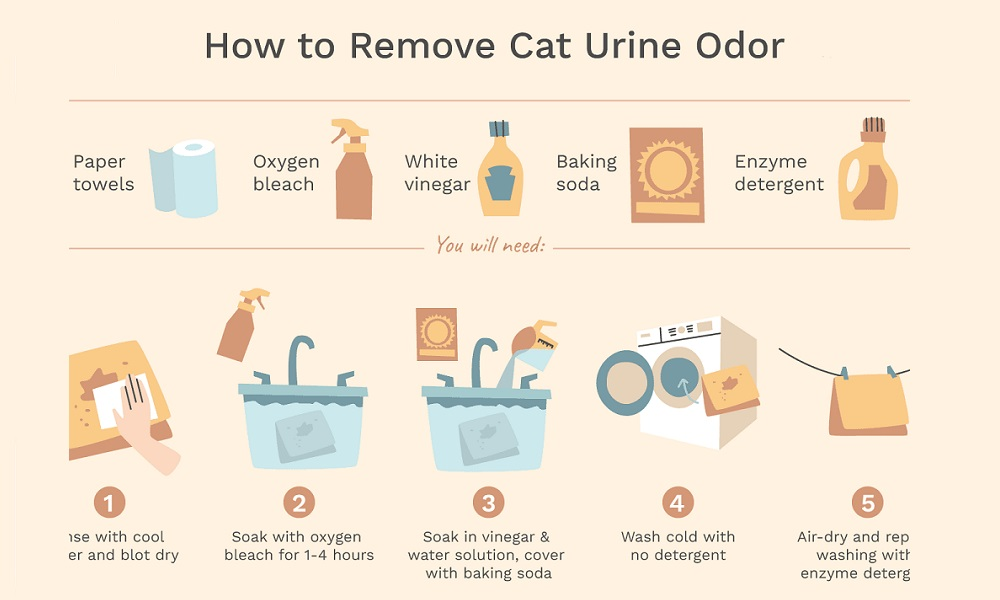 Remove Cat Spray from Clothes