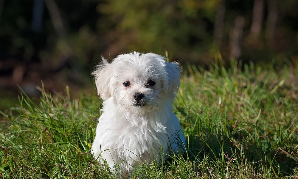 Small White Dog Names