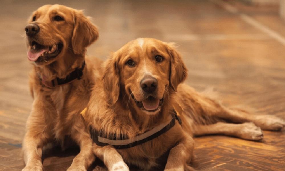 Unisex Country Dog Names