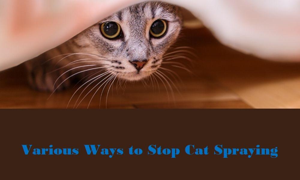 Various Ways to Stop Cat Spraying