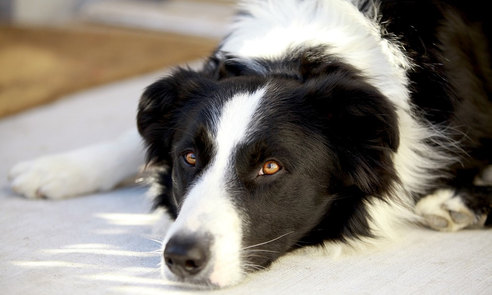 Black and White Male Dog Names