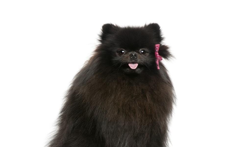 Black Fluffy Dog Names