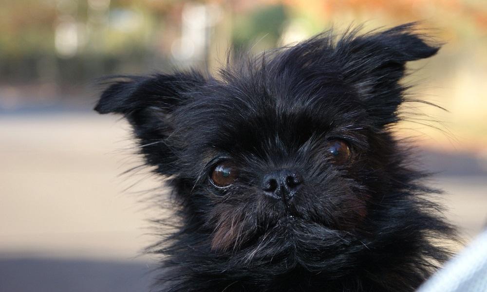 Black Pomeranian Names