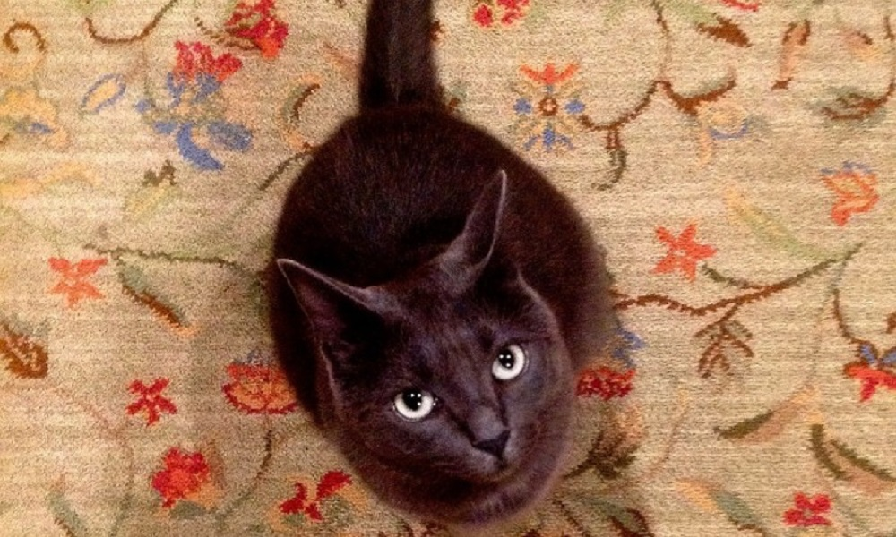Get Cat Spray Out of Carpets