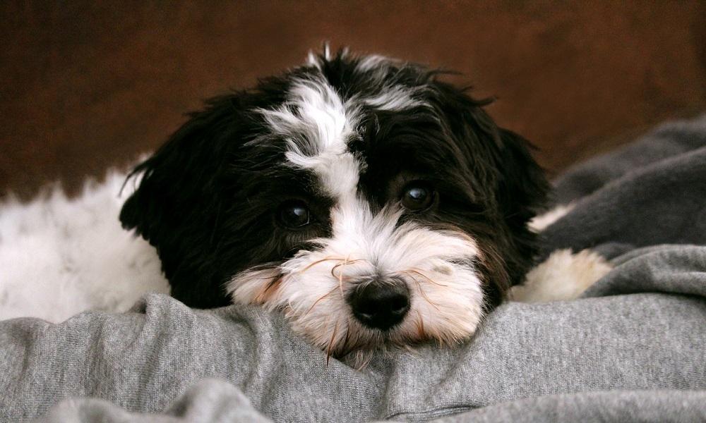 Cute Black and White Dog Names