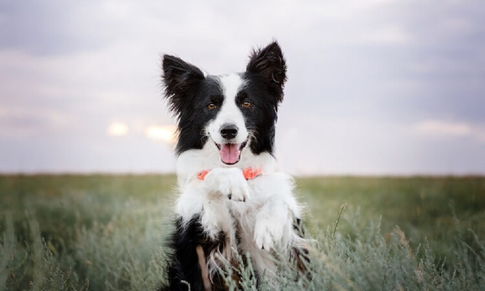 Famous Black and White Dog Names