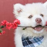 Fluffy Dog Names