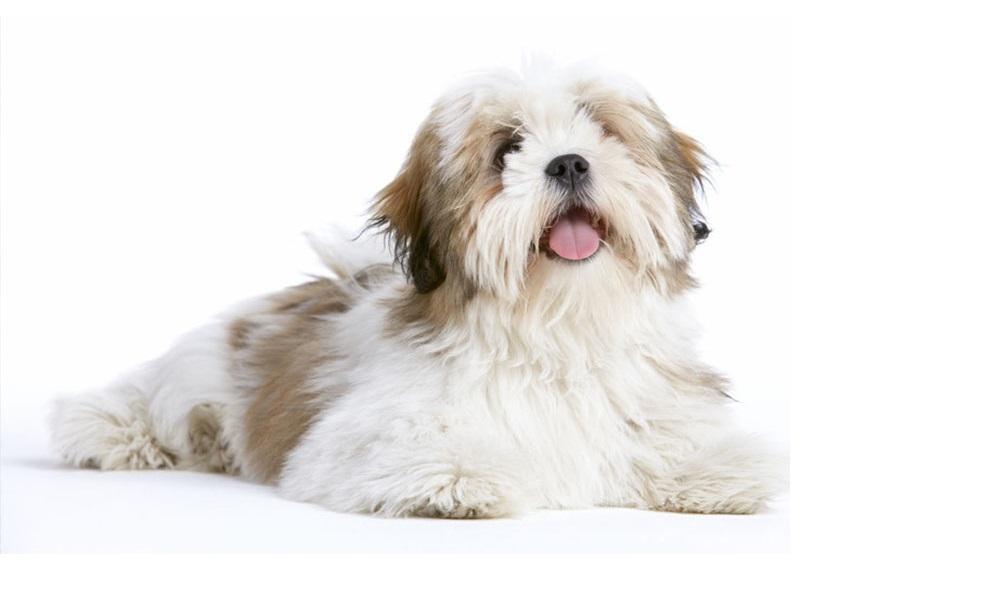 Fluffy Names for Girl Dogs