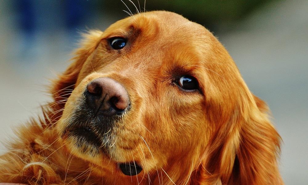 Fun Irish Dog Names
