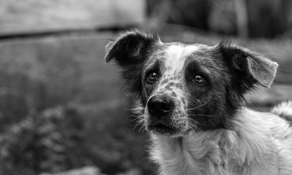 Good Names for Black and White Dogs