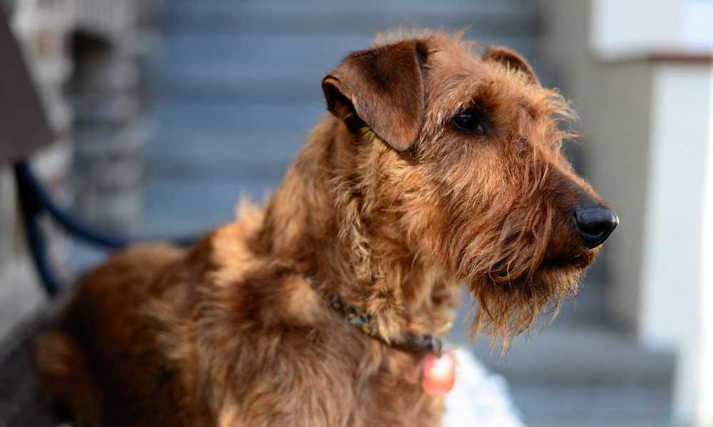 Irish Male Dog Names
