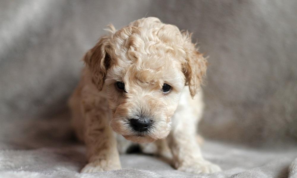 Male Fluffy Dog Names