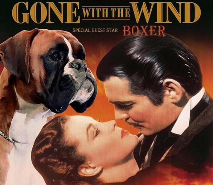 Movie Boxer Dog Names
