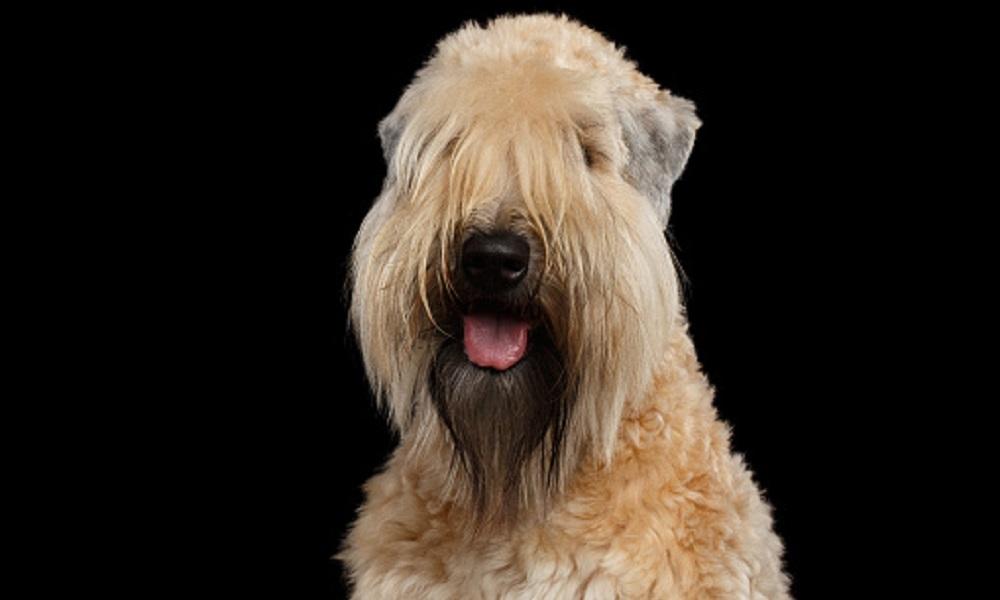 Neutral Irish Dog Names