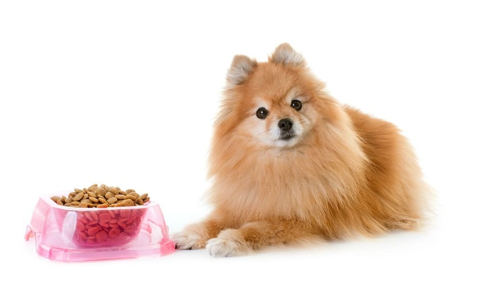 Pomeranian Dog Names Inspired by Food