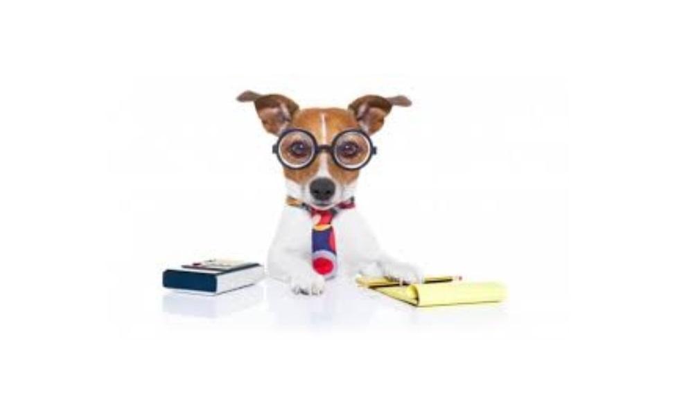 Science Nerdy Dog Names