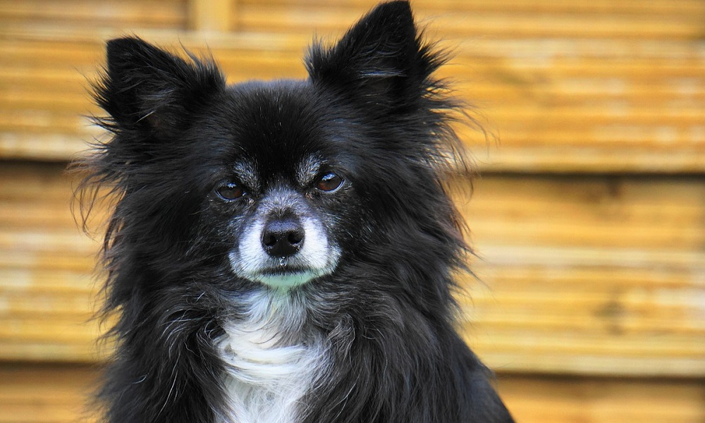Small Black and White Dog Names