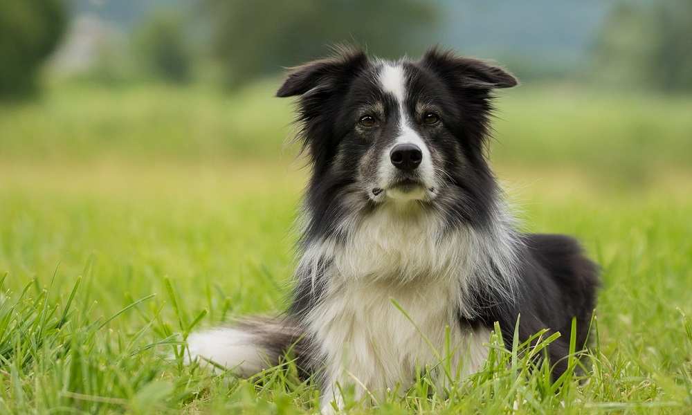 The Best Black and White Dog Names