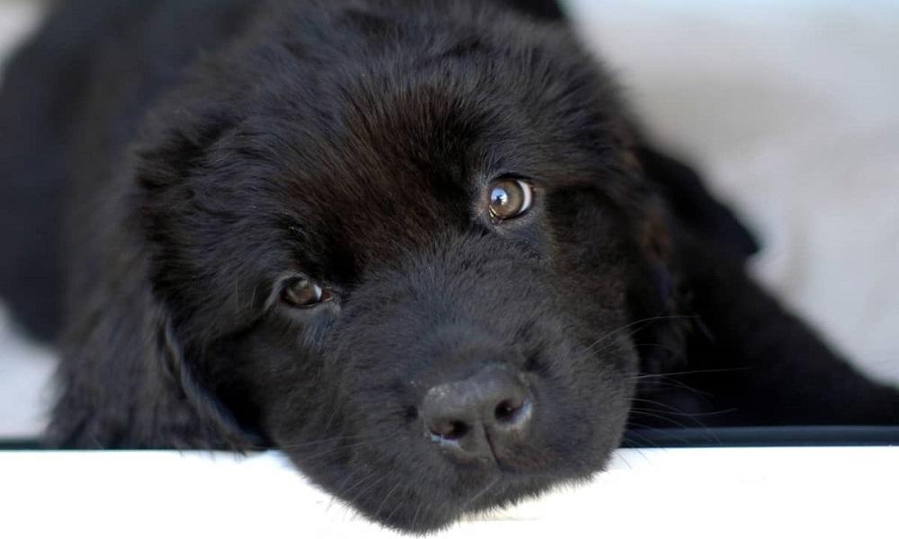 Badass Black Dog Names