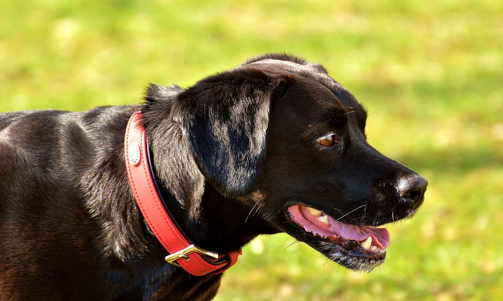Big Black Dog Names