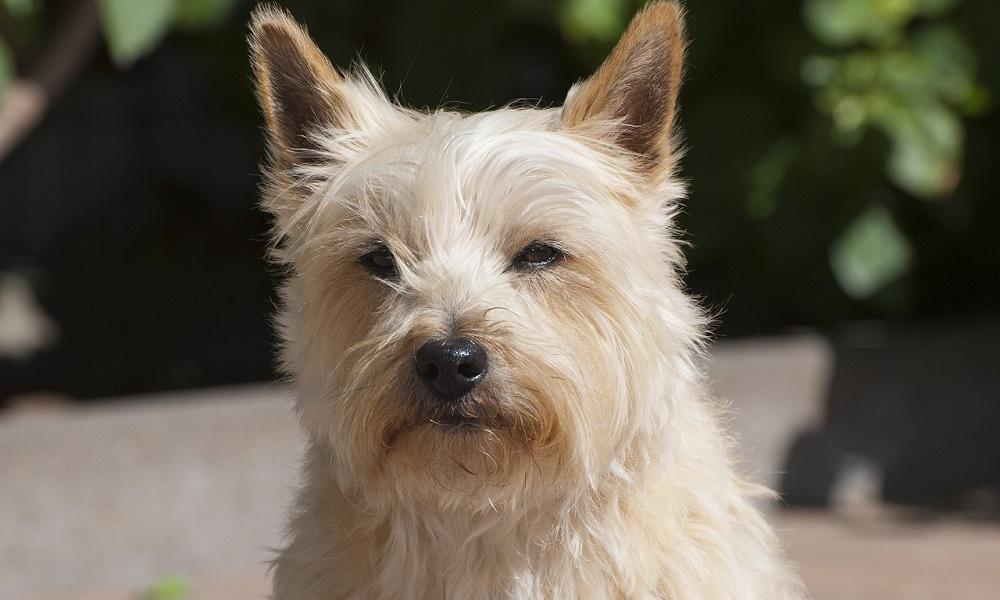 Cute Scottish Dog Names
