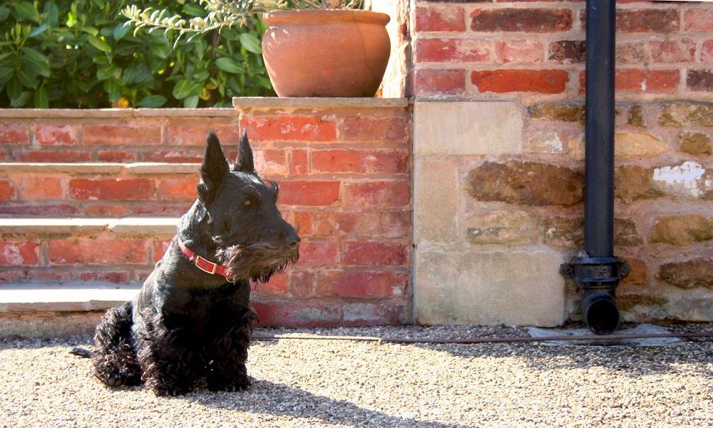 Scottish Dog Names based on Scottish Culture