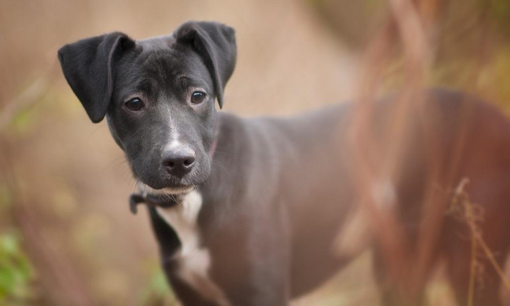 Black Dog Names Male