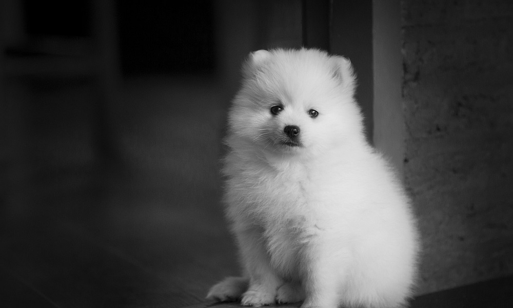 Most Popular Japanese Dog Names