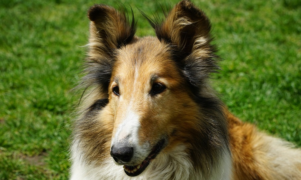 Scottish Dog Names from Gaelic Words