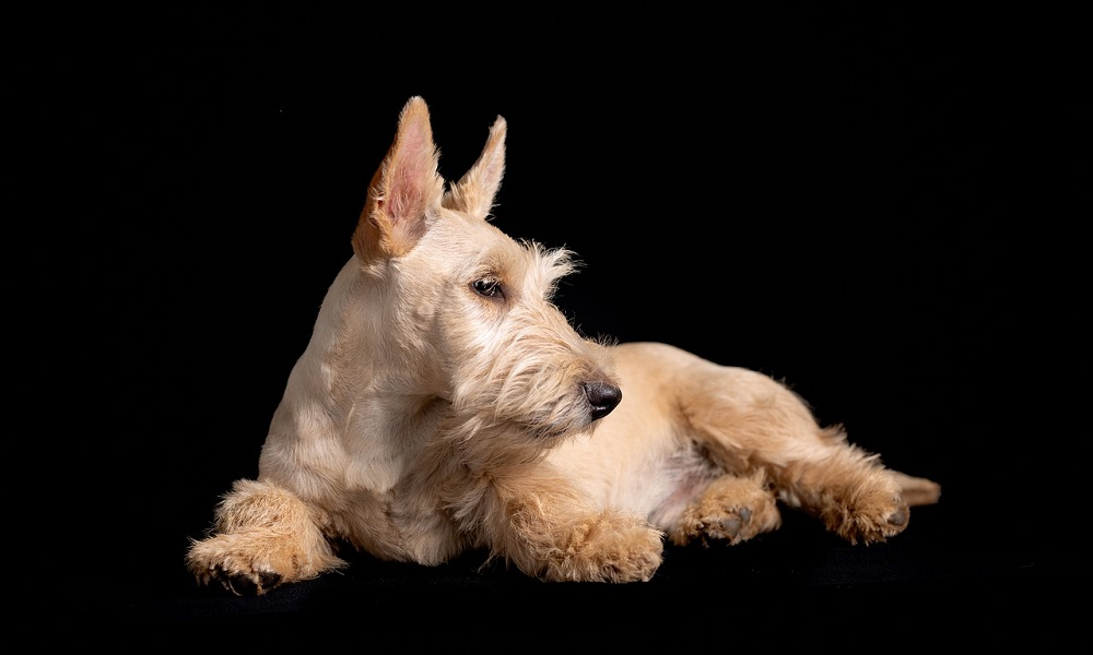 Scottish Dog Names Inspired by Geography
