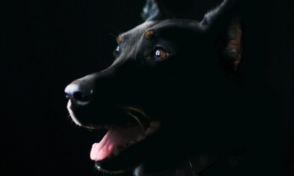 Strong Black Dog Names